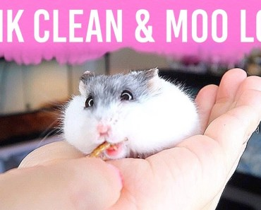 Hamster Tank Clean & Answering Questions About My Hamster Moo - hamster tank clean answering questions about my hamster moo
