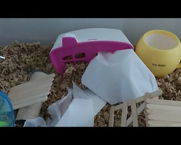 Hamster Watch - Live Stream of Tiny Hamsters in Bin Cage - hamster watch live stream of tiny hamsters in bin cage