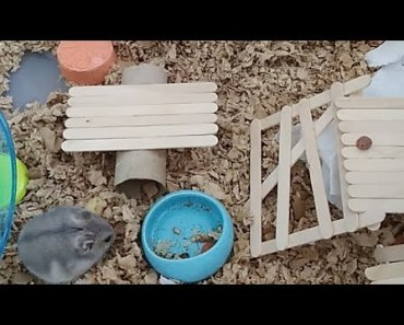 Hamster Watch - Tiny Hamsters Everyday Life - hamster watch tiny hamsters everyday life