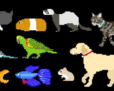 Pets - Dog, Cat, Rabbit, Fish, Birds, Hamster & More - The Kids' Picture Show (Fun & Educational) - pets dog cat rabbit fish birds hamster more the kids picture show fun educational