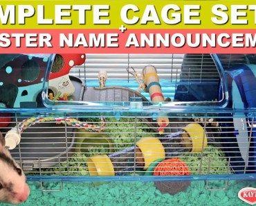 PUTTING MY NEW HAMSTER IN THE CRITTERTRAIL SUPER HABITAT - putting my new hamster in the crittertrail super habitat