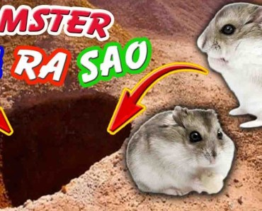 Tony | Làm Nhà Dưới Lòng Đất Cho Hamster - Hamster House In Earth's Womb - tony lam nha duoi long dat cho hamster hamster house in earths womb