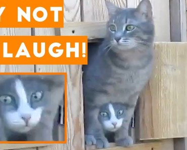 Try Not To Laugh Funniest Animal Compilation 2018 | Funny Pet Videos - try not to laugh funniest animal compilation 2018 funny pet videos