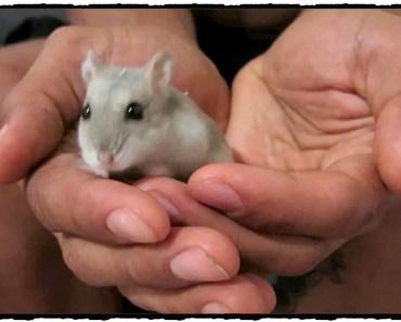 Über unseren Secondhand-Hamster, mein Bullet Journal & unsere neue Balkonbepflanzung! - uber unseren secondhand hamster mein bullet journal unsere neue balkonbepflanzung
