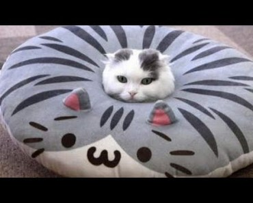 Very FUNNY CATS - Super HARD TRY NOT TO LAUGH challenge - very funny cats super hard try not to laugh challenge