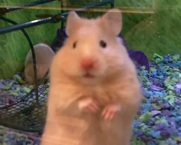 What A Cute Hamster At Petsmart - what a cute hamster at petsmart