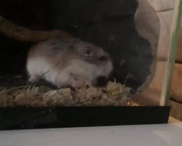 funny hamster!! - 1529740677 funny hamster