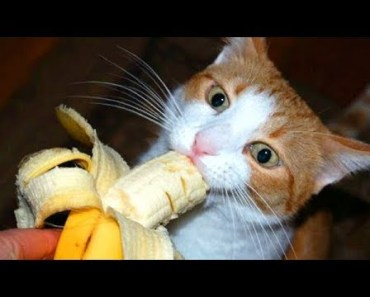 Animal Love Banana BUT Be Careful, It's Addicting! Funny Everyday Compilation - animal love banana but be careful its addicting funny everyday compilation