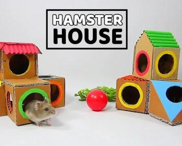 Building The Hamster's Resort From Cardboard- DIY Hamster House - building the hamsters resort from cardboard diy hamster house