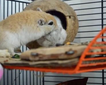 Cute and funny gerbils - cute and funny gerbils