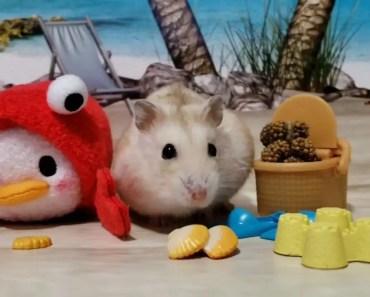 Cute Hamster Has Tsum Beach Parties [Tsum Tsum Vid] - cute hamster has tsum beach parties tsum tsum vid
