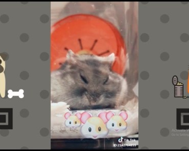 Cute Hamster Taking A Nap | NEW Funny and cute Animal-Compilation | 2018 P.7 - cute hamster taking a nap new funny and cute animal compilation 2018 p 7