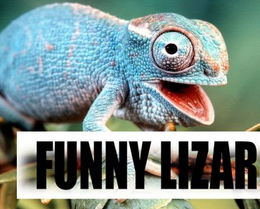 Funny and Cute Lizard/ Reptile   Try Not To Laugh Video 2018 - funny and cute lizard reptile try not to laugh video 2018