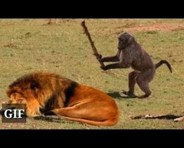Funny Animals ; Funny vedio - funny animals funny vedio