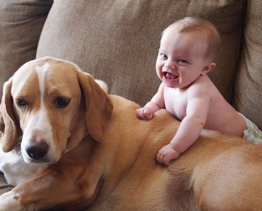 Funny Babies Laughing At Dogs - Try Not To Laugh! - funny babies laughing at dogs try not to laugh