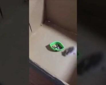 Funny Drifting Hamster - funny drifting hamster