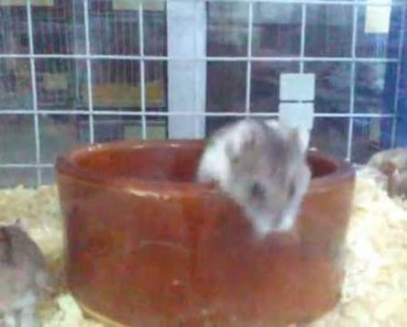 Funny hamster you must look - funny hamster you must look