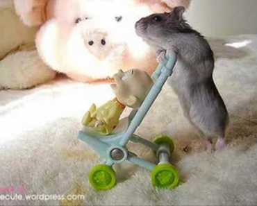 Funny Hamsters- Hamster Dance Techno Remix - funny hamsters hamster dance techno