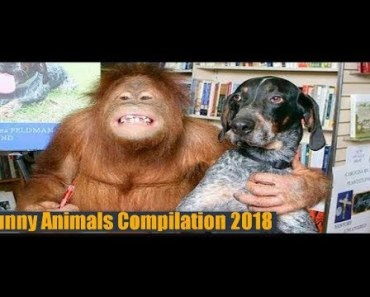 funny video ULTIMATE Funny Animals Compilation 2018 Best Animal Videos #S90J - funny video ultimate funny animals compilation 2018 best animal videos s90j
