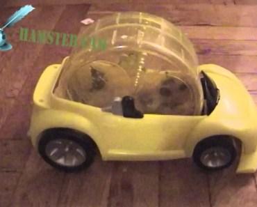 Hamlet Drives His Hamster Car - hamlet drives his hamster car