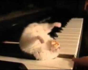 Hamster on a Piano (Eating Popcorn) - hamster on a piano eating popcorn