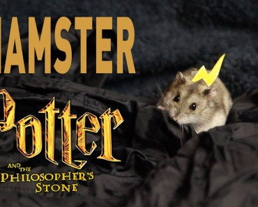 Hamster Potter and the Philosophers Stone - hamster potter and the philosophers stone
