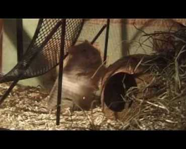 Hans Hamster whit the Hamster Song Funny Musikvideo - hans hamster whit the hamster song funny musikvideo