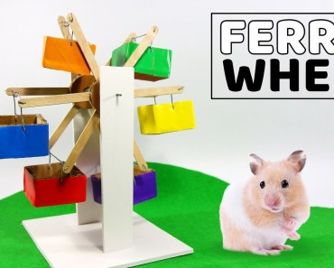 How To Make A Ferris Wheel For Your Cute Hamster Enjoying- DIY Hamster - how to make a ferris wheel for your cute hamster enjoying diy hamster