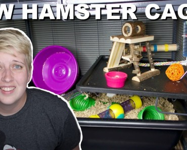 I BOUGHT NEW CAGES FOR MY HAMSTERS - i bought new cages for my hamsters