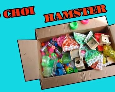 KHUI THÙNG ĐỒ CHƠI KHỔNG LỒ CHO HAMSTER - khui thung do choi khong lo cho hamster