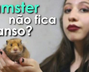Meu hamster não fica manso! O que fazer? - meu hamster nao fica manso o que fazer