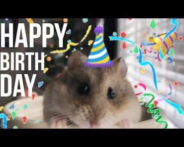 MY HAMSTERS 1ST BIRTHDAY SPECIAL!!! - my hamsters 1st birthday special