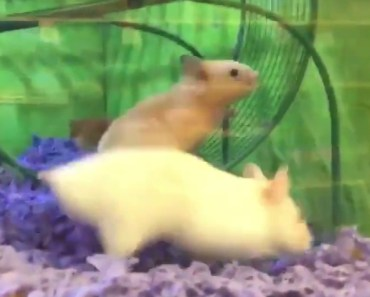 OMG! This poor hamster holding on for dear life! - omg this poor hamster holding on for dear life