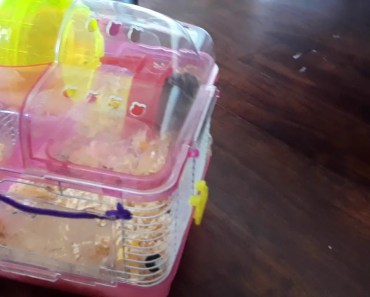 Pooping hamsters - pooping hamsters