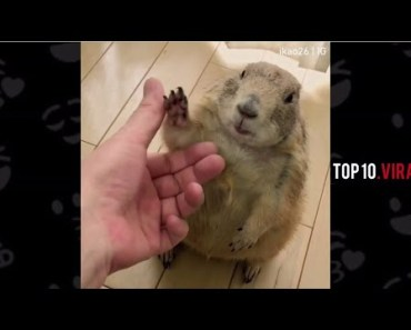 Take my hand . Will u share this with me ! | Hamsters Funny videos - take my hand will u share this with me hamsters funny videos