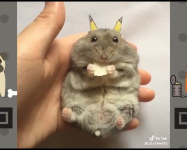 The Adorable Pikachu Hamster | NEW Funny and cute Animal-Compilation | 2018 P.1 - the adorable pikachu hamster new funny and cute animal compilation 2018 p 1