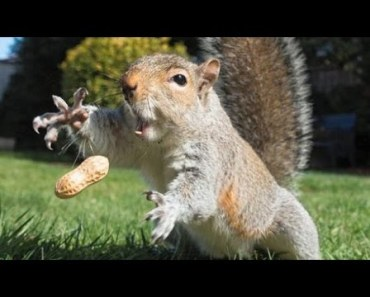 The most ridiculous & funniest ANIMAL videos #3 - Funny animal compilation - Watch & laugh! - the most ridiculous funniest animal videos 3 funny animal compilation watch laugh