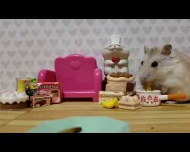 This Hamster Is The Absolute CUTEST eating treats - this hamster is the absolute cutest eating treats