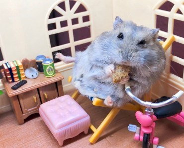 This lazy little Hamster is my life goals - this lazy little hamster is my life goals