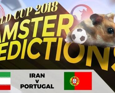 World Cup 2018 Hamster 'Predictions': Iran v Portugal - world cup 2018 hamster predictions iran v portugal