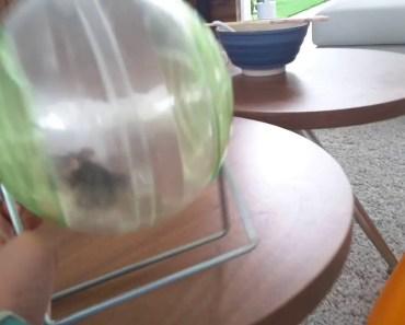 Funny hamster - 1531648204 funny hamster