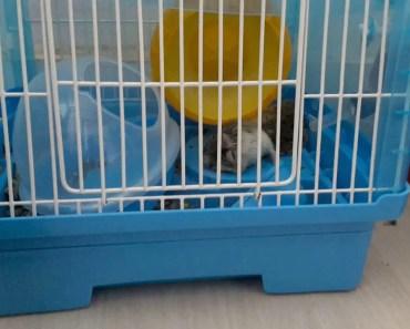 Funny hamster - 1531813263 funny hamster