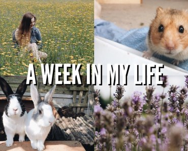 A WEEK IN MY LIFE | hamster playtime, photoshoot and pet updates | Hannah Cerys - a week in my life hamster playtime photoshoot and pet updates hannah cerys