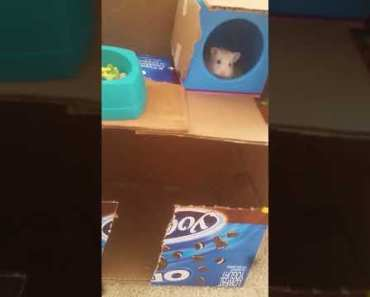 ADBOY hamster/have to see it!!!! - adboy hamster have to see it