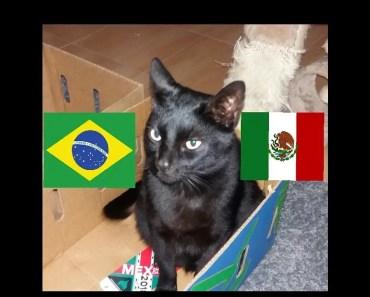 Brazil vs Mexico - Cat Prediction Fifa World Cup 2018 - brazil vs mexico cat prediction fifa world cup 2018