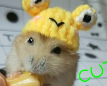 Cute Hamster In Your Hand [CUTE & FUNNY] #2 - cute hamster in your hand cute funny 2