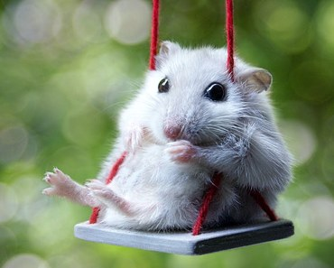 Cute Mouse Videos - Funny Mice Compilation NEW - cute mouse videos funny mice compilation new
