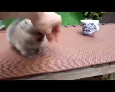 Dog Thinks Hes A Hamster - dog thinks hes a hamster