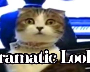 Dramatic Looks Compilation - dramatic looks compilation