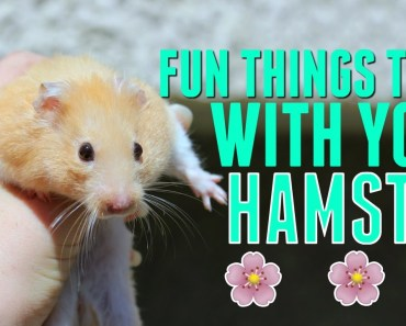 Fun things to do with your Hamster! (OLD VERSION) - fun things to do with your hamster old version